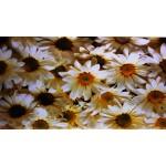 Quadro stampa digitale su legno raffigurazione fiori 120x50x4 cm
